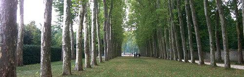 trees.jpg