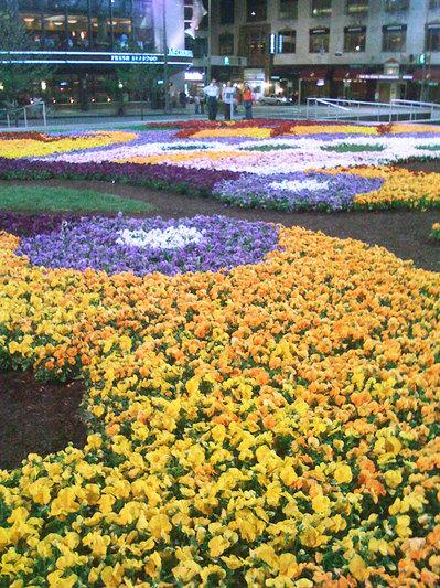 FlowerCarpet1.jpg