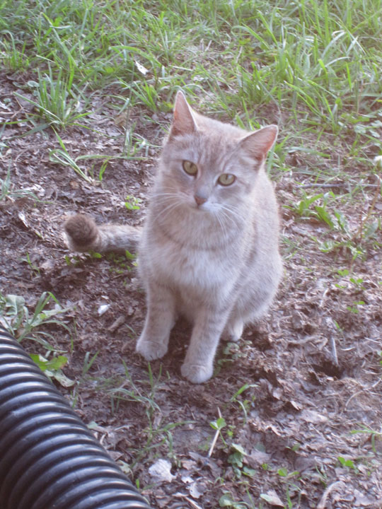 http://morristsai.com/blogpics/cabanaontheriver8.jpg